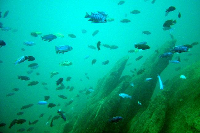 DSC01998_lake_malawi_fish.jpg